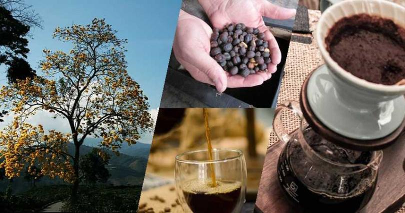 花香、酒香、咖啡香 爵士級的精品咖啡帶你走進慾望城市中的夜生活