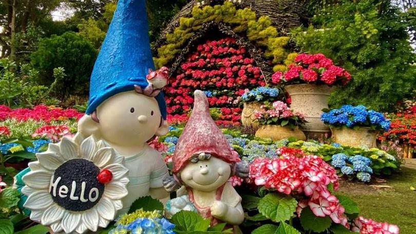 花露農場的繡球花已綻放。(圖/花露農場)