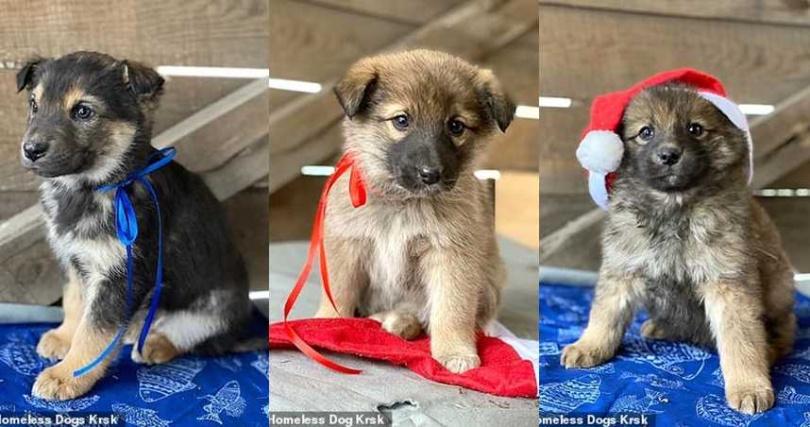 在救援人員的幫助下,小狗們逐漸恢復體力,等待一個新家。(圖/翻攝每日郵報)