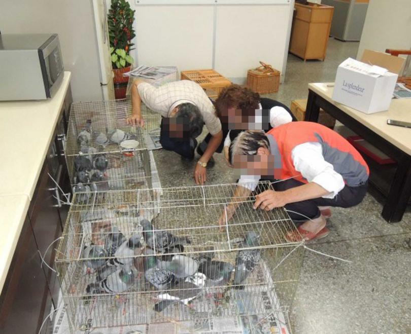警方接獲線報後會前往山區割除網具救鴿,帶回警局通知鴿主前來領回。(圖/報系資料照)