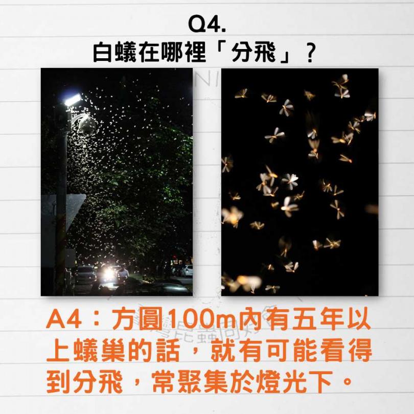 梅雨季經常能見到白蟻群分飛。