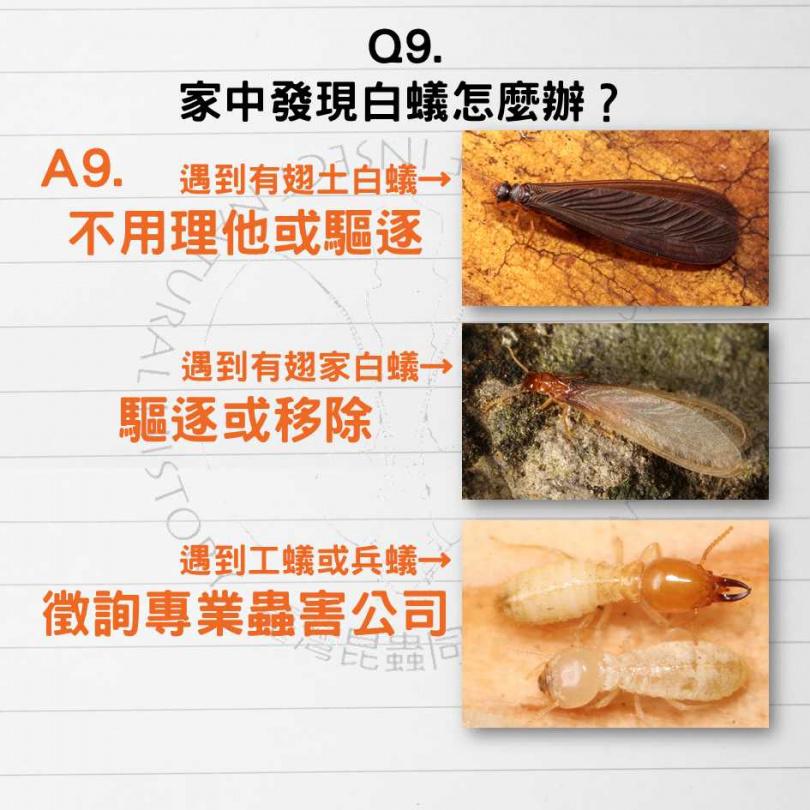 發現白蟻無須過度緊張,必要時可洽詢專業蟲害公司處理。