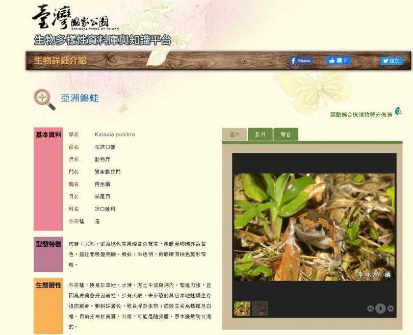 外來種花鋏口蛙,分佈範圍逐漸擴大,恐影響本土蛙類生存空間。(圖/台灣國家公園)