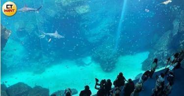 桃園最新「Xpark水生公園 」搶先看 萌呆海豹企鵝空中游 絕美珊瑚超療癒