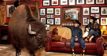 巨無霸寵物!牛仔夫妻「1噸水牛」養屋內 同桌吃飯看電視