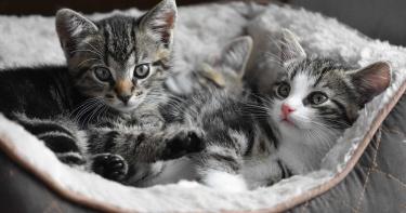 房子留給66隻貓住自己卻搬走!鄰居痛苦「不敢開窗」:味道太重