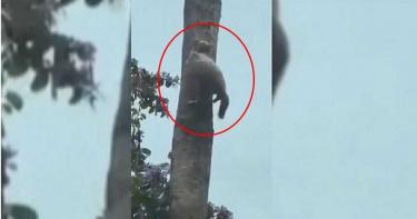 爬樹到一半竟遭冰封 貓咪動作栩栩如生掛高空