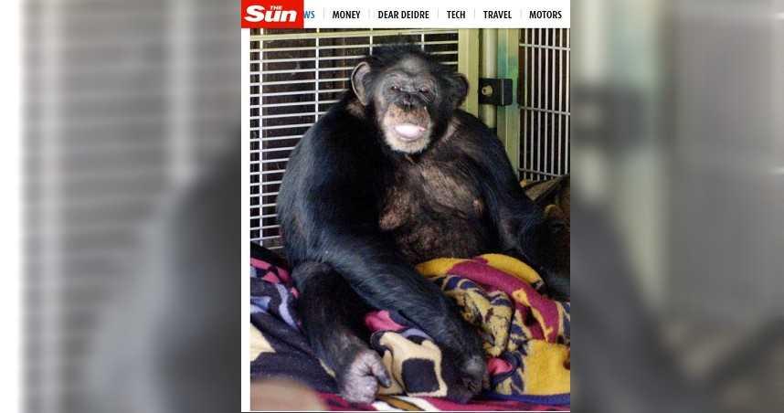 寵物黑猩猩發狂狠咬飼主女兒 警獲報持槍射殺救援
