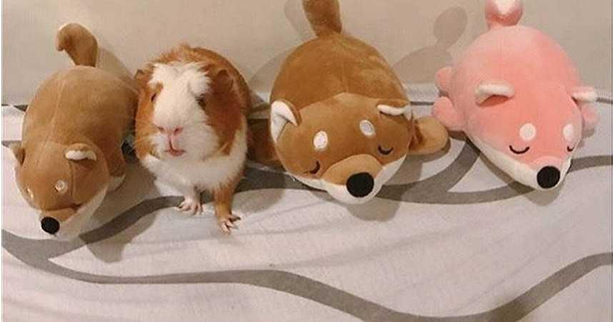 史上首現寵物鼠鬧學測 被抓到試務中心等候發落