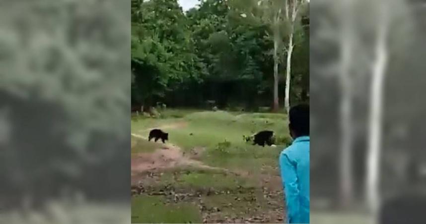 足球高手在叢林!黑熊「踢球、頂球」一把罩 男童球遭搶傻眼