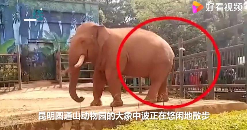 遊動物園竟「故意餵食塑膠袋」 貪吃大象一口吞下去…結局曝光