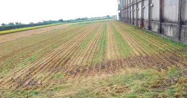 6000多斤稻米3小時被盜割 農民不追究但警方依法究辦