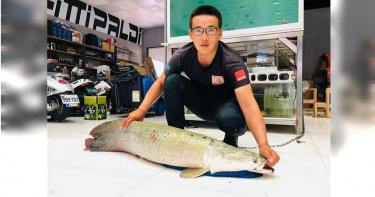 150公分象魚突「想不開」跳缸、內出血不治 網驚:可能是擋災