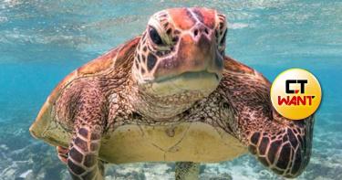 海龜暴怒「比X指」!票選最喜劇的野生動物大賽 超療癒人心