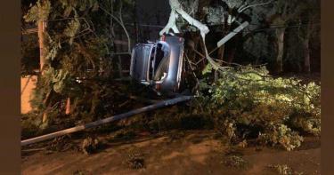 急速過彎 轎車飛越道路掛樹頭