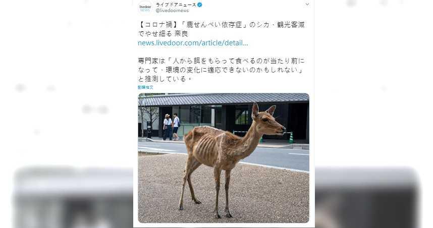 讓人心疼!疫情衝擊無遊客前往 奈良鹿「肋骨根根分明」瘦成皮包骨