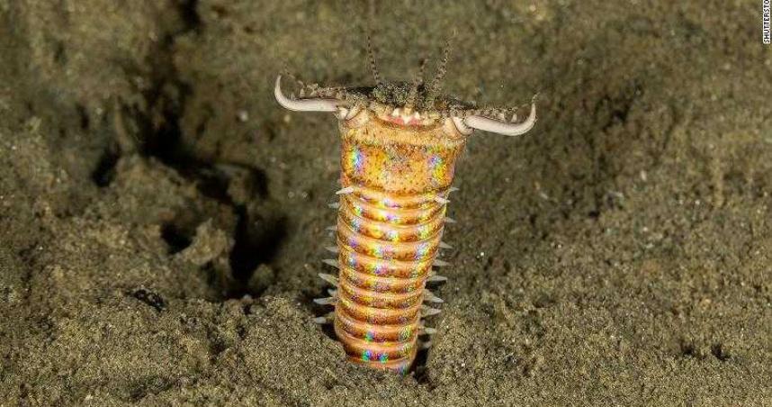 台灣東北部發現「2千萬年前蠕蟲巢穴」 長達2公尺、直徑2.5公分