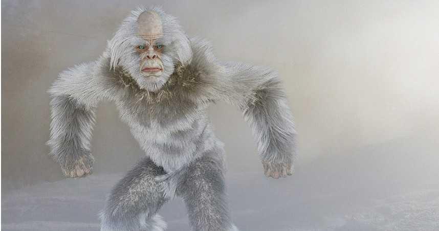 搜奇/神祕生物「雪人」存在嗎?  學者有答案竟和北極熊有關
