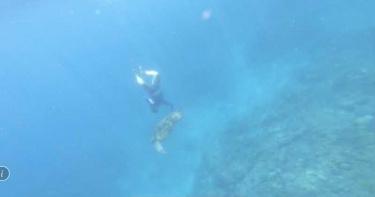 遊小琉球隨意騷擾海龜 無聊男子摸一把恐噴50萬