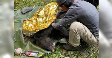 讓牠回家1/山羌遭斷喉震撼正妹獸醫 成立東部野生動物醫院與天搶命