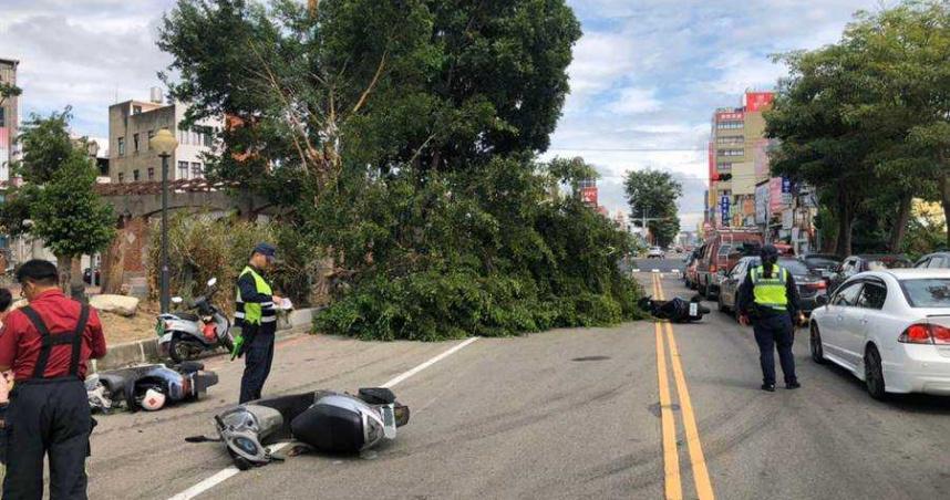 禍從天降 苗栗路樹斷折壓傷下方5男女