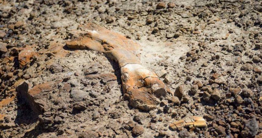 12歲少年遠足發現神秘骨頭 檢測後竟是6900萬年前恐龍化石