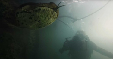 世界最大!攝影師巧遇「巨無霸綠水蟒」樂歪 貼近鏡頭好奇互動