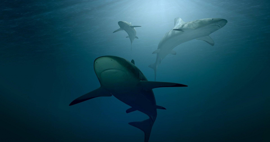 二戰慘案!美國軍艦遭魚雷擊沉 1195人遭鯊魚「吃到飽」僅316人獲救