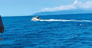 高速快艇嚇鯨豚 遊客看到畫面拳頭硬了