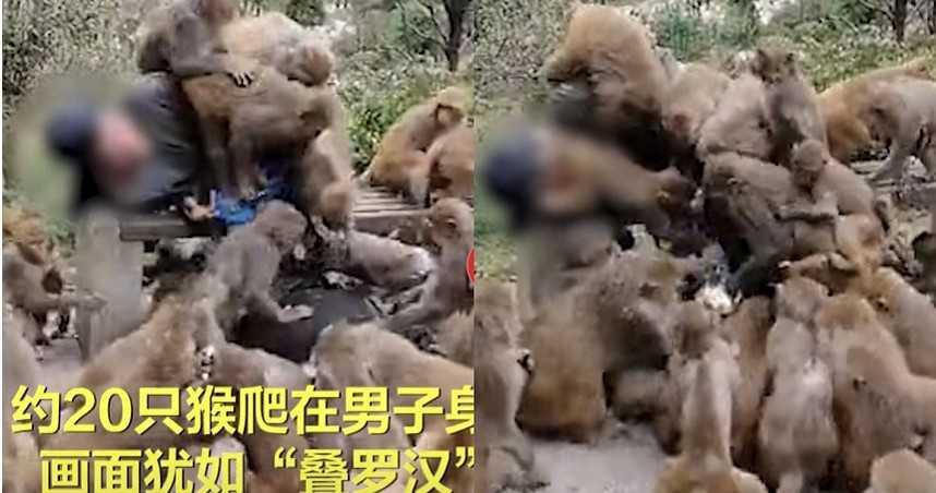 20隻獼猴見「男遊客拿食物」秒衝上身狂搶!他慘被淹沒 驚悚畫面曝