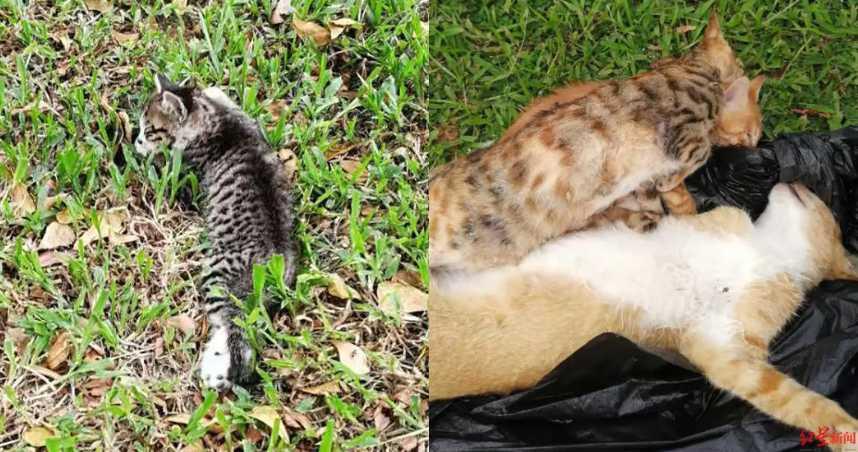 8隻野貓遭毒殺!「瞪大雙眼」全身扭曲慘死…愛貓人士心痛收屍