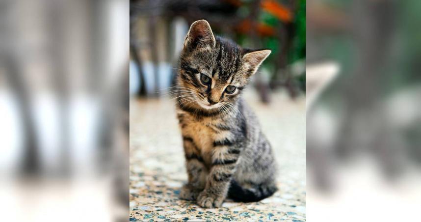 情侶吵架她離家出走 渣男「熱水澆小貓」逼返家下場曝光