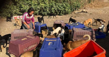 【愛心捐贈情報】狗園建設勸募計畫 持續不斷的援助流浪動物