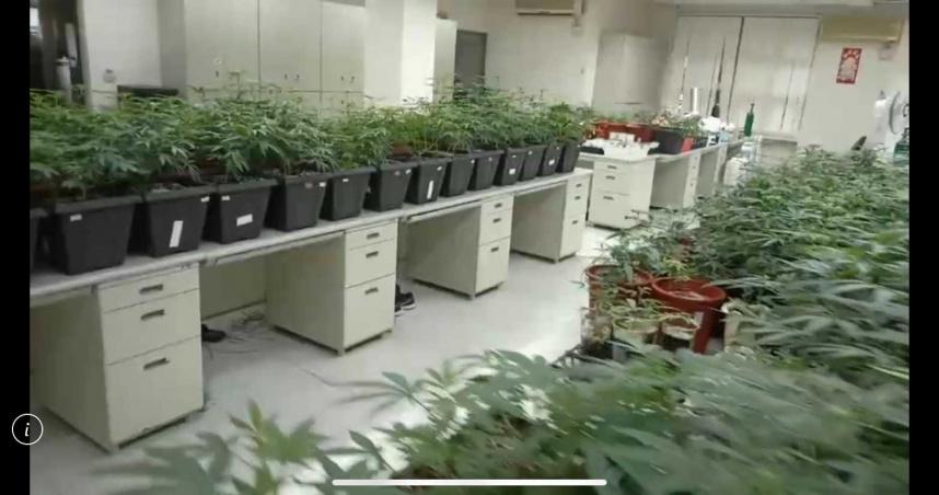 社區住宅成大麻溫室 537株市值破億元