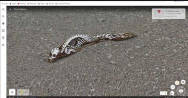 冰山融化顯蹤跡 Google地球在南極拍攝到「神秘骸骨」