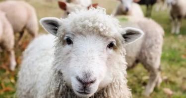 恐怖植物刺齒糾纏!羊吃草「食羊樹吃羊」 腐爛味吸引更多動物步死亡陷阱