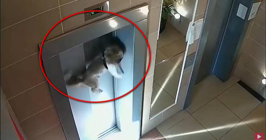 糊塗主人搭電梯直衝16樓 小狗遭勒脖懸吊半空路人伸手搶救