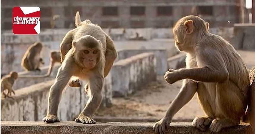 潑猴爬牆瘋狂猛推致坍塌 母子睡夢中被磚頭壓死…一家7口剩2人