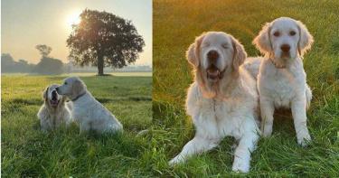 毛小孩罹患青光眼失明 主人心疼幫牠找「導盲犬」
