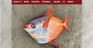 神秘「月魚」遭沖上岸 民眾爭睹罕見「溫血魚」
