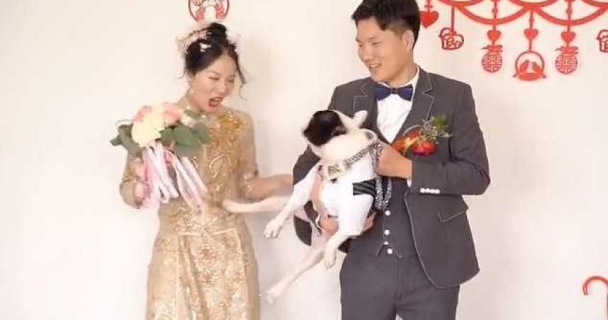 2歲法國鬥牛犬婚禮上「踢走新娘」 轉頭跟新郎索吻笑翻眾人