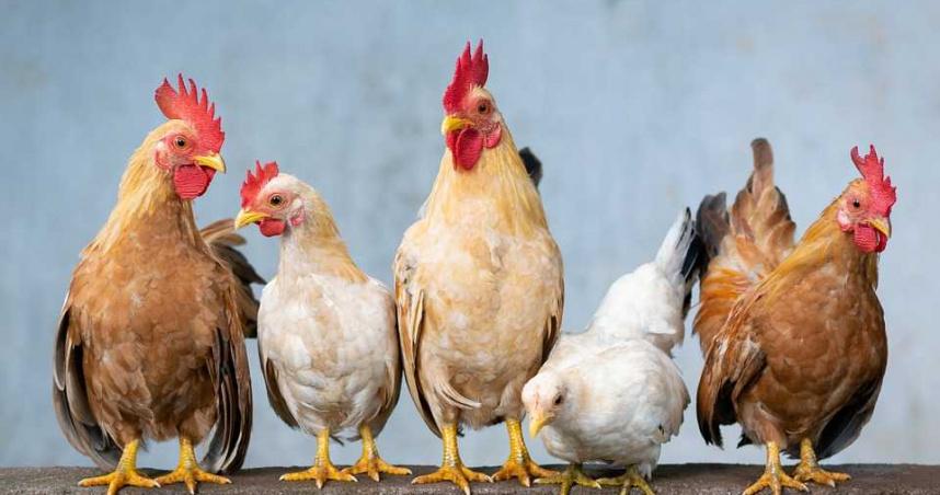 全球首例!中國驚現「禽傳人」H10N3禽流感 專家曝大流行風險