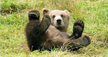 進死亡牢籠後反鎖…馴獸師遭7歲熊狂襲 「整片頭皮被撕下」慘死