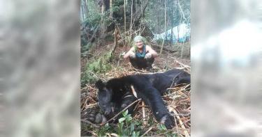 20隻全因人為死傷!熊族振興之路坎坷 黑熊媽媽痛心籲7建議