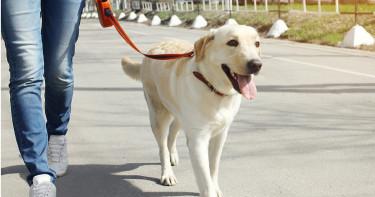 心臟病患養狗 死亡風險降低24%