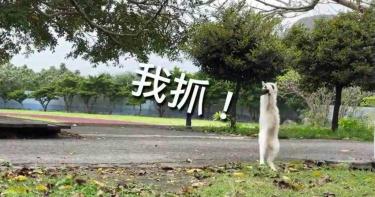 寒假延後開學 蘭嶼校貓餓壞展狩獵本性
