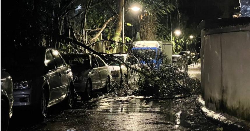 圓規外圍環流肆虐巨樹橫倒路中央阻交通 員警深夜動員鋸木