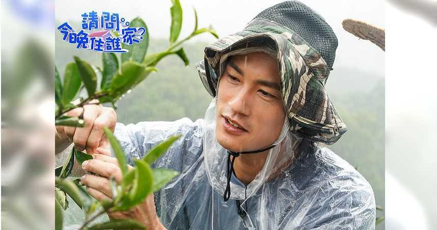 鍾承翰冒雨採茶 成效不佳被吐槽:需要吃葉黃素