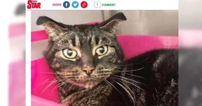 貓咪疑遭惡意棄養 空屋內「吃紙果腹」52天獲救