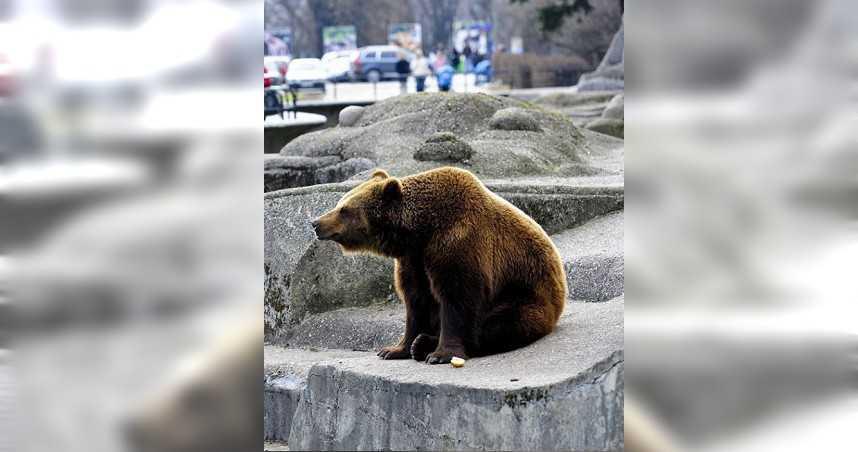 醉漢闖動物園攻擊母熊遭提告 因「沒戴口罩」判罰21萬